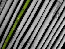Grüner Bambus Lizenzfreies Stockbild