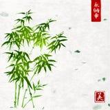 Grüner Bambus auf handgemachtem Reispapierhintergrund lizenzfreie abbildung