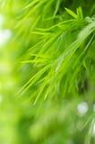 Grüner Bambus verlässt Feld Stockfotos
