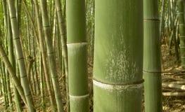 Grüner Bambushintergrund Stockbild