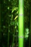 Grüner Bambusstiel Lizenzfreie Stockfotografie