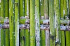 Grüner Bambuszaun Stockbilder