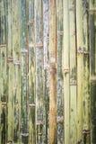 Grüner Bambuszaunhintergrund Lizenzfreie Stockbilder