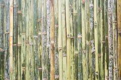 Grüner Bambuszaunhintergrund Lizenzfreie Stockfotografie