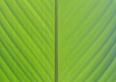 Grüner Bananenblatt-Hintergrundauszug Lizenzfreie Stockbilder
