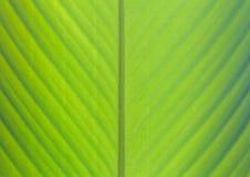 Grüner Bananenblatt-Hintergrundauszug Stockfotografie