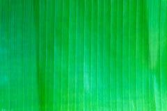 Grüner Bananenurlaubhintergrund Stockfotos