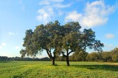 Grüner Bauernhof Stockfotos