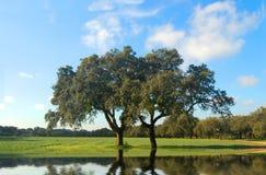 Grüner Bauernhof Stockbilder
