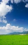 Grüner Bauernhof mit blauem Himmel und weißen Wolken Stockfotografie