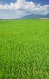 Grüner Bauernhof mit blauem Himmel und weißen Wolken Lizenzfreie Stockfotografie
