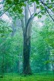 Grüner Baum Lizenzfreies Stockbild