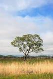 Grüner Baum 2 Lizenzfreie Stockfotografie
