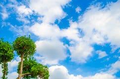 Grüner Baum auf blauem Himmel Lizenzfreie Stockfotos