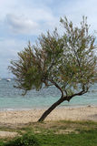 Grüner Baum auf dem Strand Stockfoto