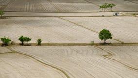 Grüner Baum auf dem trockenen Gebiet Stockfotos