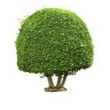 Grüner Baum auf dem Weiß Lizenzfreies Stockbild