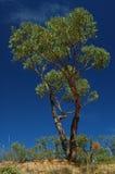 Grüner Baum auf einem blauen Himmel lizenzfreie stockfotografie