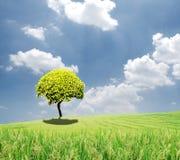 Grüner Baum auf einem Gebiet auf blauem Himmel Lizenzfreie Stockfotografie
