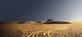 Grüner Baum auf einem Hügel mitten in einem leeren Feld lizenzfreies stockfoto