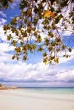 Grüner Baum auf einem weißen Sandstrand Lizenzfreies Stockfoto