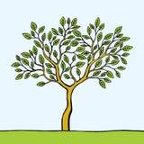 Grüner Baum auf einer Wiese gegen blauen Himmel Lizenzfreie Stockfotografie