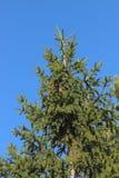 Grüner Baum auf Hintergrund des blauen Himmels Lizenzfreies Stockfoto