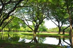Grüner Baum auf Naturpark lizenzfreies stockfoto
