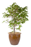 Grüner Baum auf Weiß Lizenzfreies Stockfoto