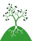 Grüner Baum auf weißem Hintergrund Lizenzfreie Stockfotografie