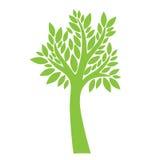 Grüner Baum auf weißem Hintergrund Stockbilder