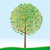 Grüner Baum auf Wiese Stockbild