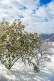Grüner Baum bedeckt mit Schnee Lizenzfreie Stockfotos