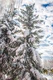 Grüner Baum bedeckt mit Schnee Lizenzfreies Stockbild
