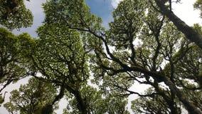 Grüner Baum, der oben schaut lizenzfreie stockfotos