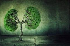 Grüner Baum formte wie die menschlichen Lungen, die vom konkreten Boden wachsen Lizenzfreie Stockbilder