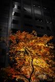 Grüner Baum geleuchtet durch Sonne Lizenzfreies Stockfoto