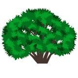 Grüner Baum getrennt auf weißem Hintergrund Stockfoto