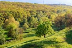 Grüner Baum im Hügel Lizenzfreie Stockfotografie