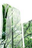 Grüner Baum im hohen Gebäudeschatten Stockfoto