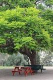 Grüner Baum im Park Stockfoto