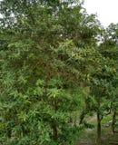 Grüner Baum ist schön stockfoto