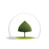 Grüner Baum ist unter dem Schutz stockbilder