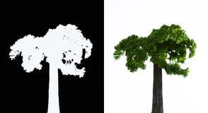 Grüner Baum klein Lizenzfreie Stockfotos