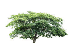 Grüner Baum lokalisiert Stockbilder