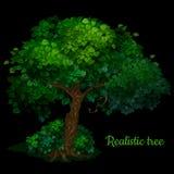 Grüner Baum lokalisiert auf einem schwarzen Hintergrund lizenzfreies stockfoto