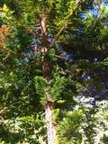 Grüner Baum mit einer Taube und einer großen Sonne lizenzfreie stockfotos