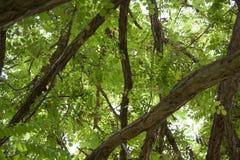 Grüner Baum mit nettem Laub lizenzfreie stockfotos
