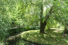Grüner Baum mitten in dem Fluss im Park lizenzfreies stockfoto