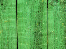 Grüner Baum ` s Hintergrund stockbilder